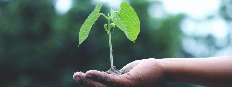 Nachhaltiges Handeln mit ECOVADIS nachweisen